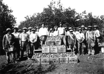 Orange pickers on Hewes Ranch smaller